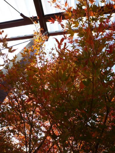 紅葉狩り・嵐山37
