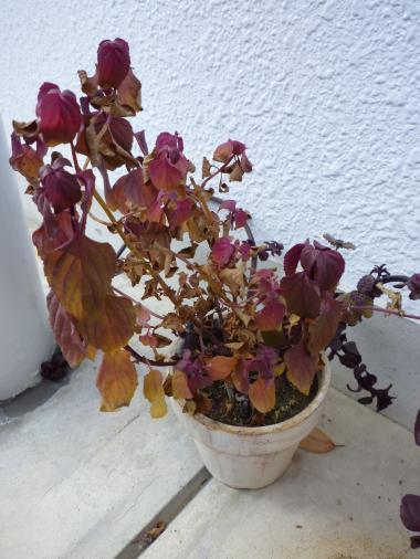 植物たち9