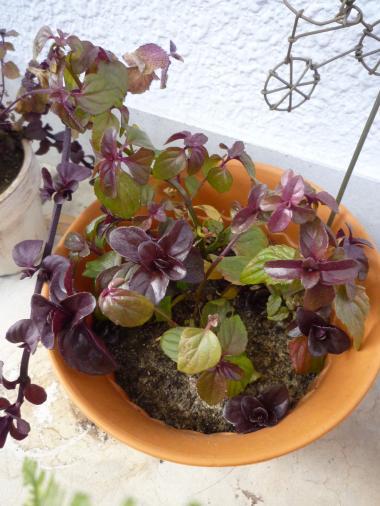 植物たち8