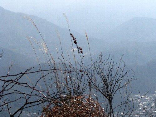 4 山頂の盆栽