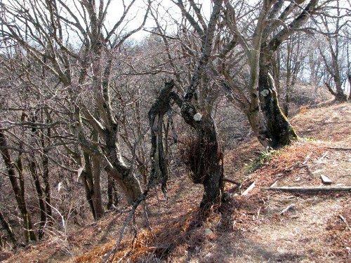 6 山頂の木