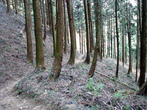7 下り杉の道