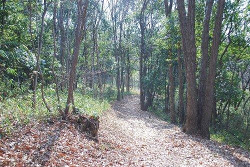 4 また林