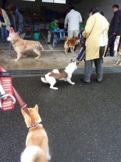 1004狂犬予防
