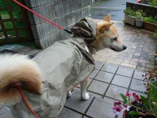 201005雨