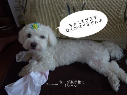 cyoma-6.jpg