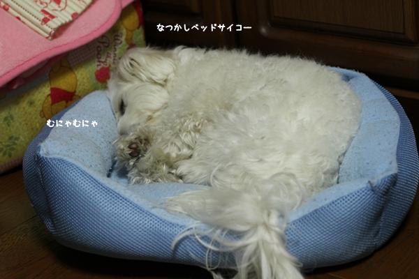 gejiji-6.jpg