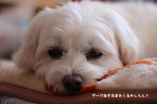 gejiji-7.jpg