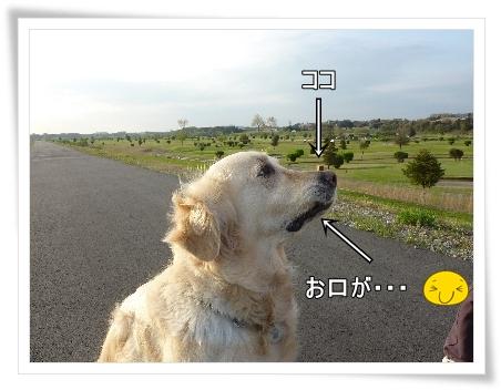 hanagei-3.jpg