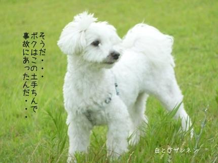 jiko-1.jpg