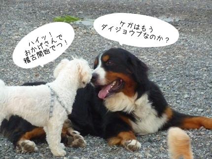 jiko-10.jpg