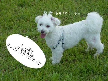 jiko-16.jpg