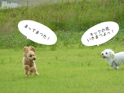 jiko-6.jpg