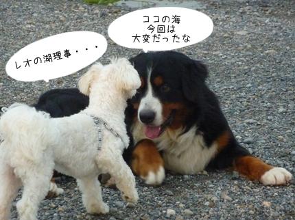 jiko-9.jpg