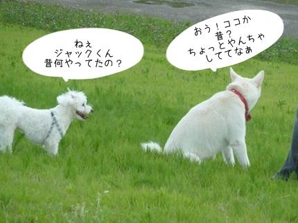 jyako-1.jpg
