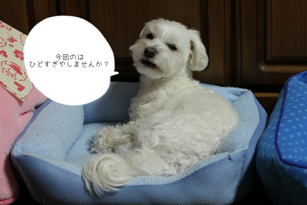 kadokado-1.jpg