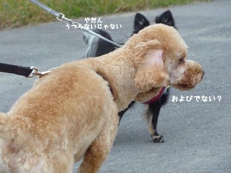 komuku-2.jpg