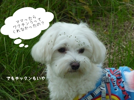 mizubo-2.jpg
