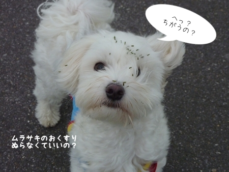 mizubo-3.jpg