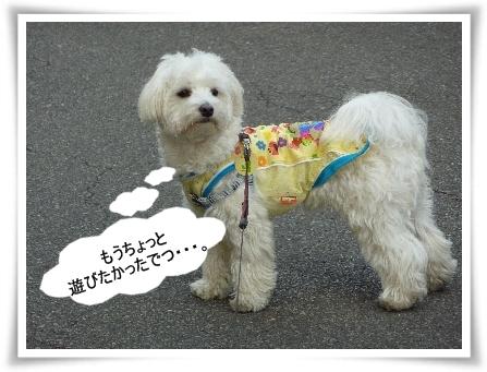 mokococo-3.jpg