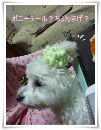 nagicoco-4.jpg