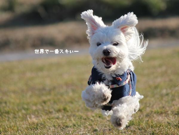 nako11-3.jpg
