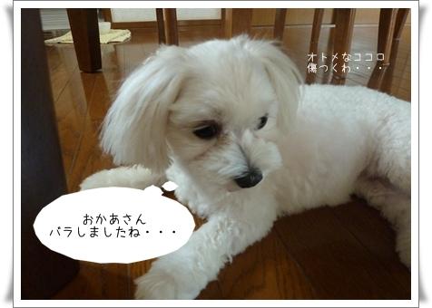 nanagiwa-10.jpg