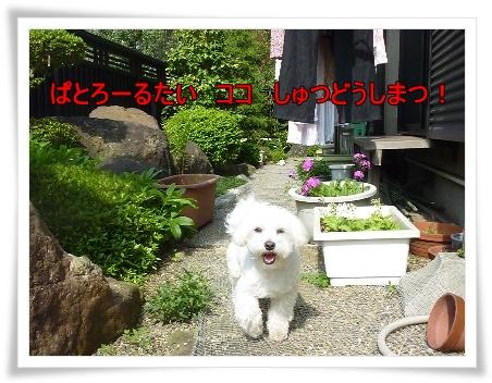 niwa-8.jpg