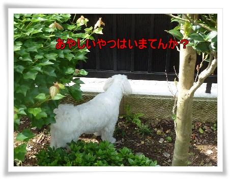 niwa-9.jpg