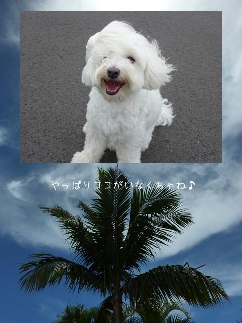 okinawa-15.jpg