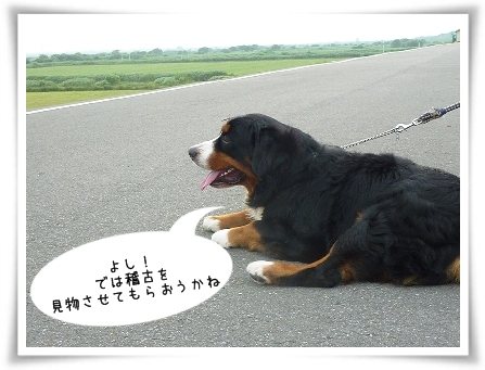 riji-6.jpg