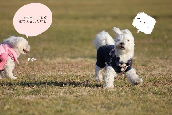 ryoku11-5.jpg