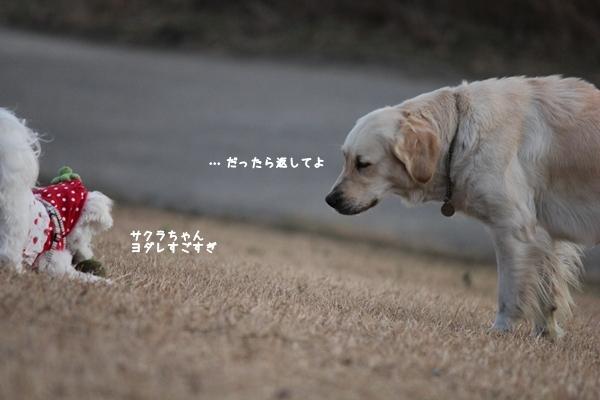 sakuyonnda-1.jpg