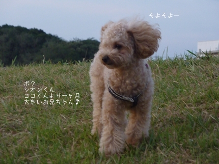 sion-3.jpg
