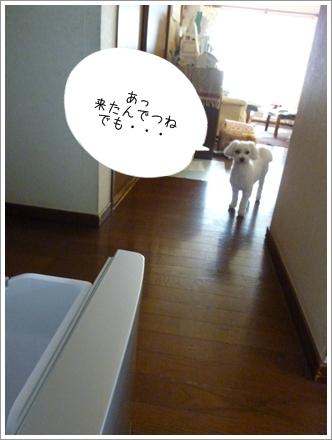 zozo-3.jpg