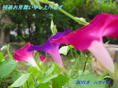 005_20110809121256.jpg