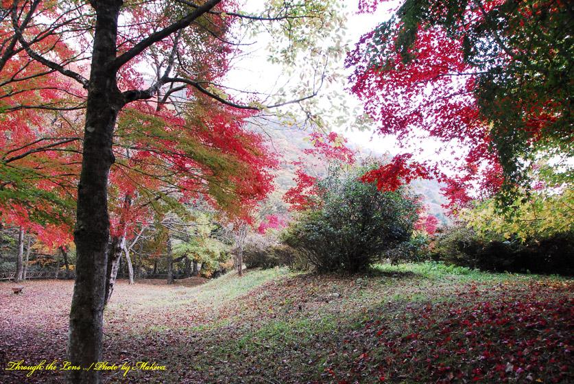 花園花貫自然公園2