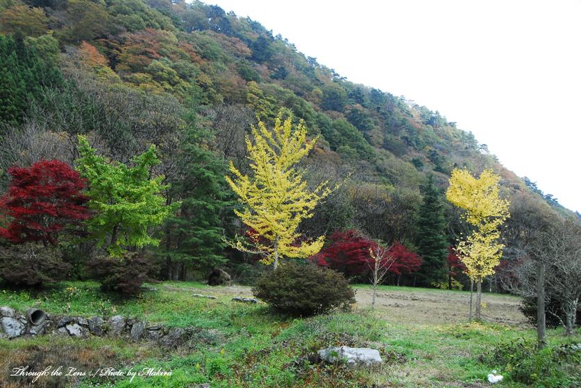 花園花貫自然公園3