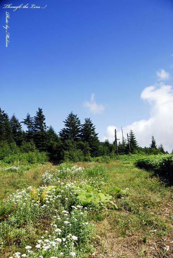 パルキャビン山頂1