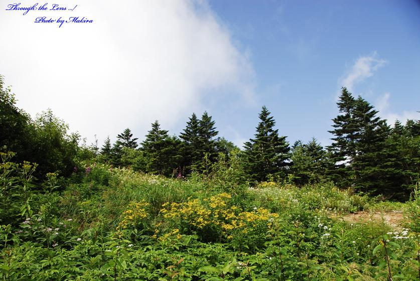 パルキャビン山頂2