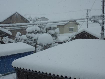 こんなに雪が降りました