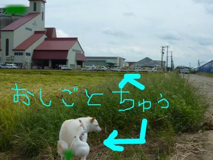 snap_a2z14u_201091212455.jpg