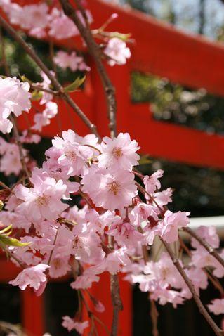 お花見 2 002-1