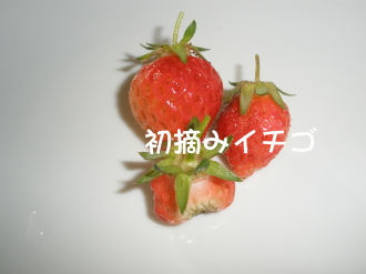 P5190179.jpg
