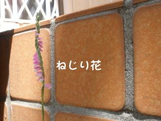 P6280354.jpg