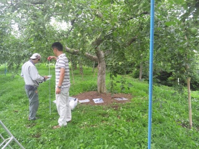 リンゴ畑測定2