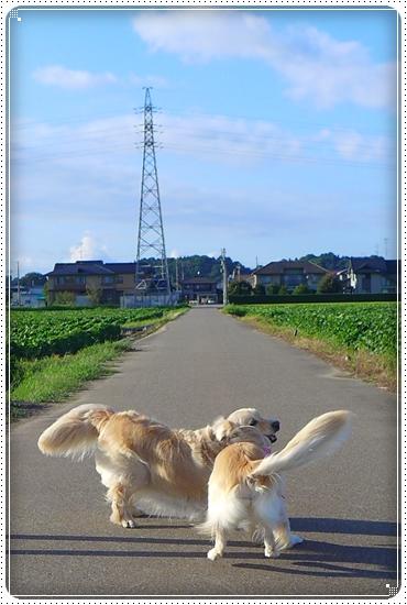 2013,8,2お散歩2