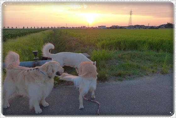 2013,8,19お散歩4