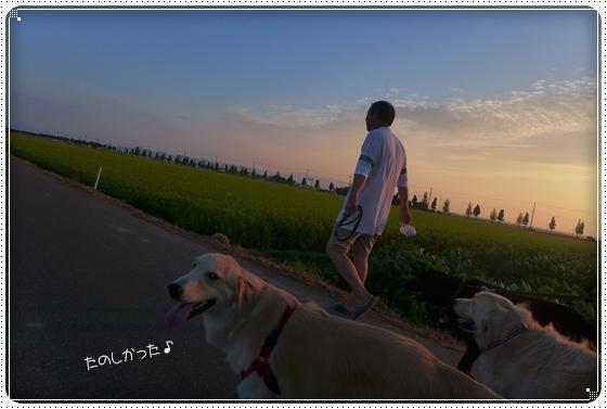 2013,8,19お散歩5