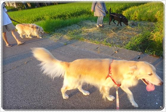 2013,8,19お散歩1
